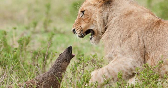 חיות שמוכיחות שהגודל לא קובע