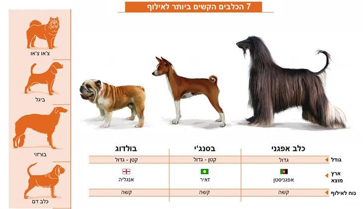טיפים לאילוף כלבים