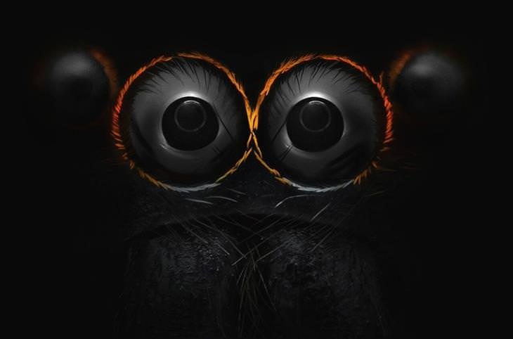 עיני עכביש קופץ