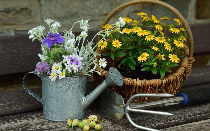 עציץ ולידו משפך מים עם פרחים