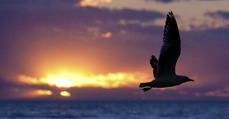 עובדות על החיים: ציפור עפה מעל לים