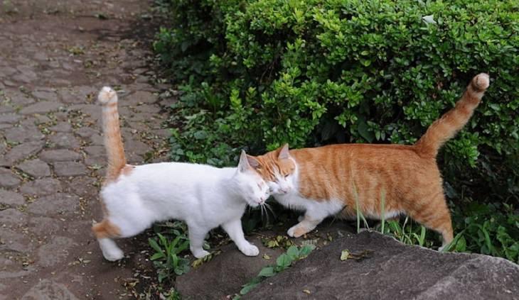 שני חתולים מתחככים זה בזה