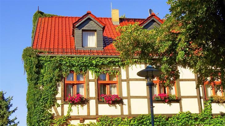 בית עם הרבה צמחים מטפסים שמעטרים אותו