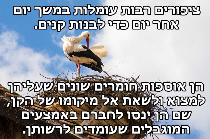 """מצגת ציפורים: """"ציפורים רבות עומלות במשך יום אחר יום כדי לבנות קנים. לצורך כך הן אוספות חומרים שונים שעליהן למצוא ולקחת איתן בחזרה אל מיקומו של הקן, שם הן ינסו לחברם באמצעים המוגבלים שעומדים לרשותן."""""""