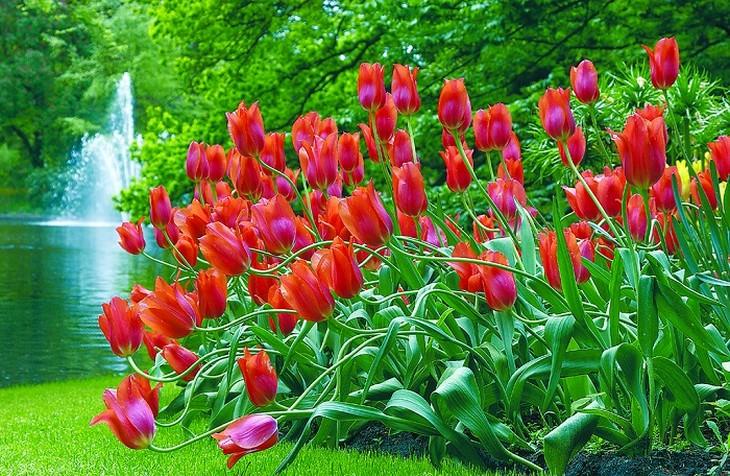 פרחי צבעוני ורודים