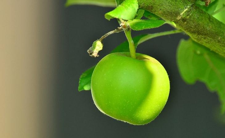 משקה בריאות לשינה טובה: תפוח עץ