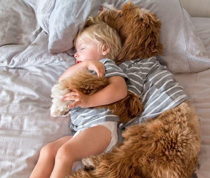 כלב ישן מחובק עם פעוט במיטה