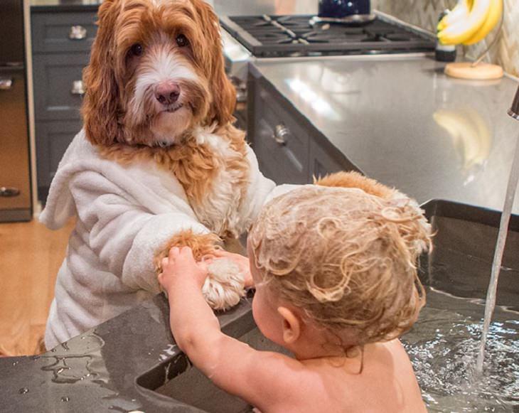 פעוט מתרחץ בכיור וכלב רוכן מעל דלפק השיש