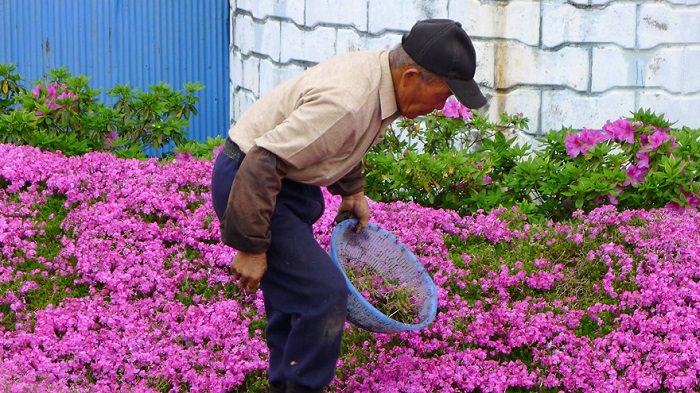 בעל גידל פרחים