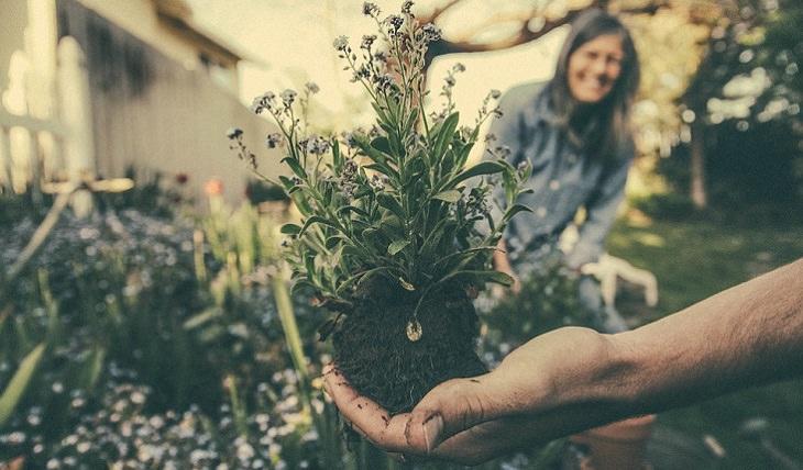 המדריך המלא לגידול צמחים בבית