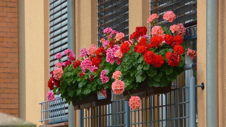 מדריך לגידול פרחים: אדניות פרחים על חלון בניין