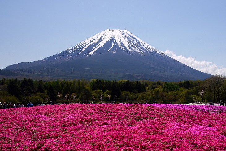 המקומות המדהימים ביותר ביפן: פסטיבל השיבזקורה