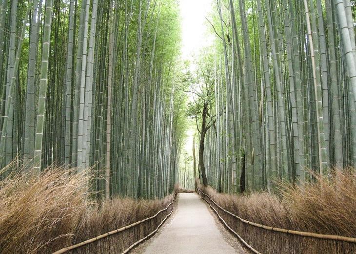 המקומות המדהימים ביותר ביפן: יער הבמבוק באראשיאמה