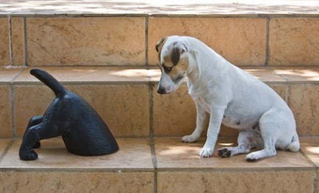 כלבים מבולבלים