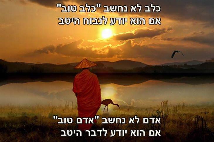 ציטוטי בודהה