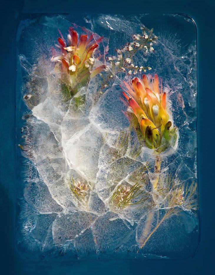 פרחים כתומים בתוך בלוק של קרח