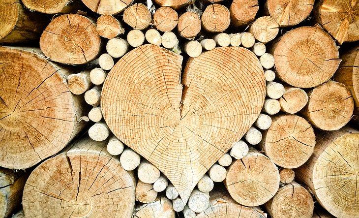 יתרונות בריאותיים של צנוברים: בולי עץ מסודרים בערימה ובמרכז עץ בצורת לב