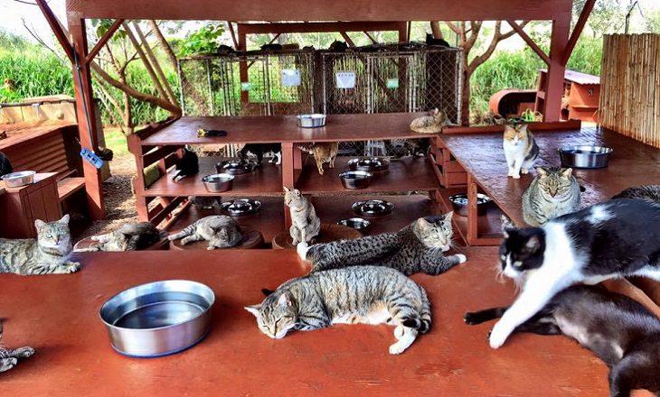 גן עדן לחתולים