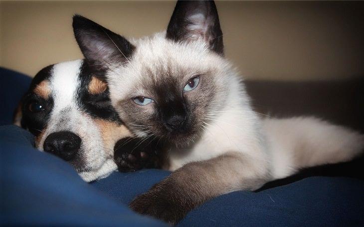 סימנים למחלה אצל חיות מחמד: חתול וכלב