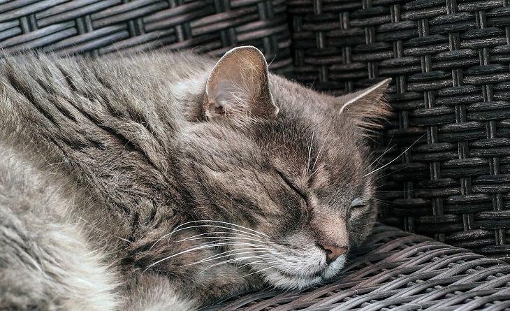 סימנים למחלה אצל חיות מחמד: חתול ישן