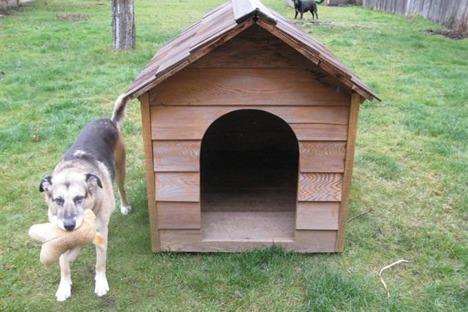 כלב ליד מלונה