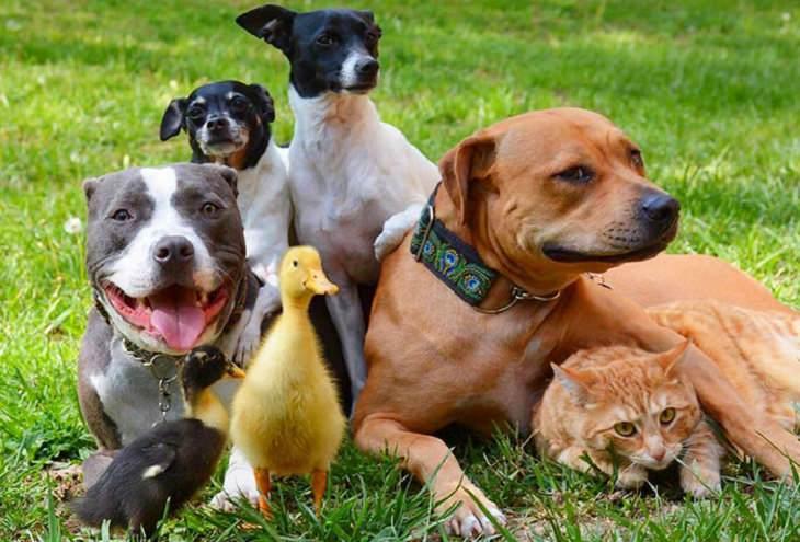 חיות שמוכיחות שמשפחה כן בוחרים