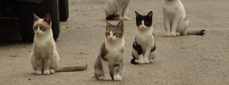 15 שימושים מפתיעים ויעילים לקפה: חתולי רחוב