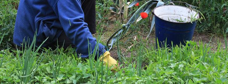 15 שימושים מפתיעים ויעילים לקפה: עבודה בגינה