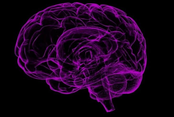 מזונות על למניעת אלצהיימר: איור של מוח סגול על רקע שחור