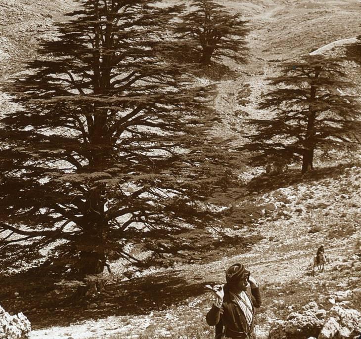הרי לבנון