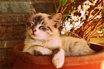 מזונות מומלצים לחיות מחמד: חתול ישן בתוך אדנית