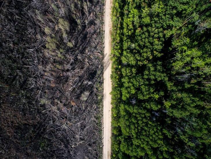 שביל אחד שעצר שריפה של יער שלם