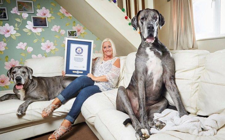 ספר השיאים של גינס לשנת 2018: הכלב הגבוה בעולם