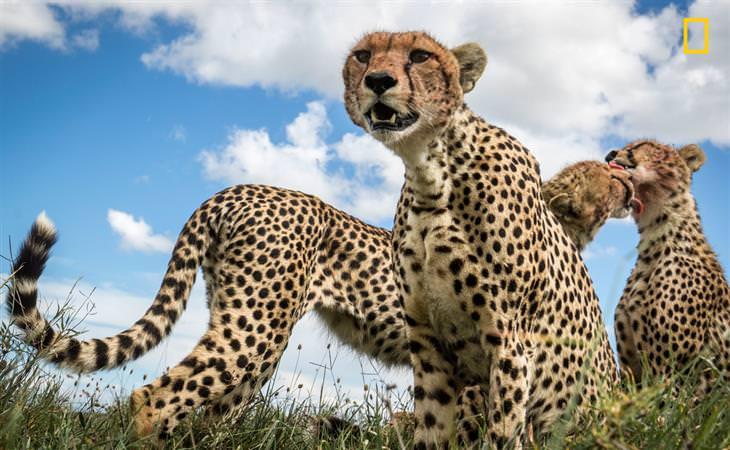 תחרות צילומי טבע של הנשיונל ג'יאוגרפיק: משפחת ברדלסים