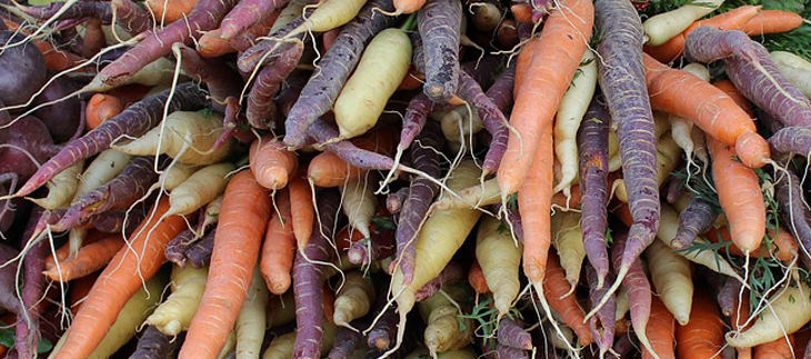 ירקות בגוונים שונים - איזה זן בריא יותר: גזרים כתומים, סגולים ולבנים