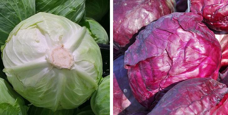 ירקות בגוונים שונים - איזה זן בריא יותר: כרוב ירוק וסגול