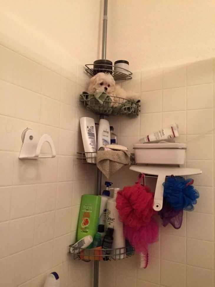 חיות מחמד שלא מוכנות לעזוב את הבעלים שלהן: כלב עומד על מדף באמבטיה