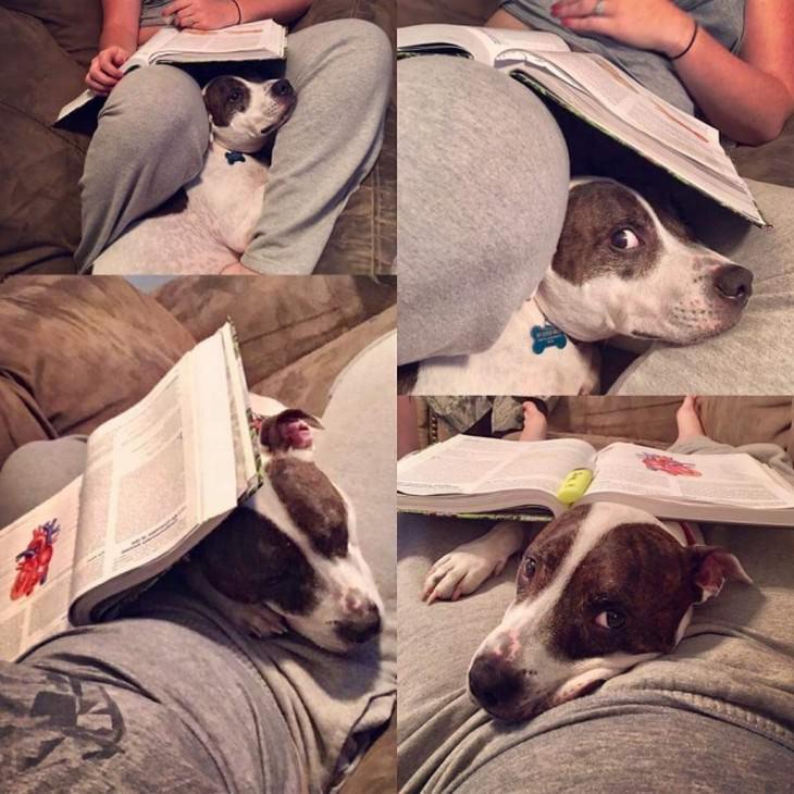 חיות מחמד שלא מוכנות לעזוב את הבעלים שלהן: כלב מפריע לבעלים שלו לקרוא ספר