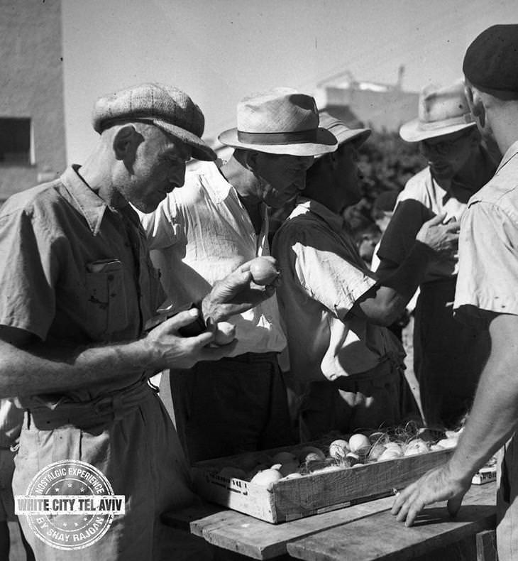 """תמונות ישנות של תל אביב: גברים בוחרים אתרוגים בשוק ארבעת המינים - צילום ד""""ר יעקב רוזנר"""