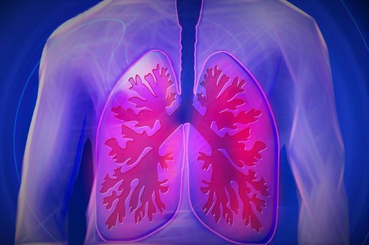 תסמיני אלח דם: איור של ריאות מודלקות בגוף האדם
