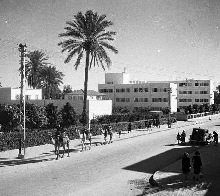 תמונות ישנות של תל אביב: שנת 1940, גמלים חוצים את רחוב לוינסקי ומצולמים מפינת שדרות הר ציון, שכונת נווה שאנן- צלם לא ידוע