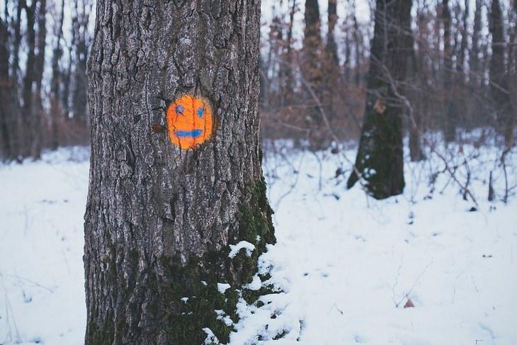 אמיתות על החיים: פרצוף מצויר על גזע עץ בחורשה מושלגת
