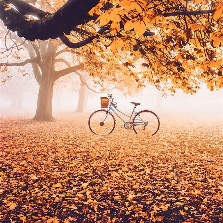 סתיו ברחבי העולם: לונדון - אופניים עומדות תחת עץ עם שלכת