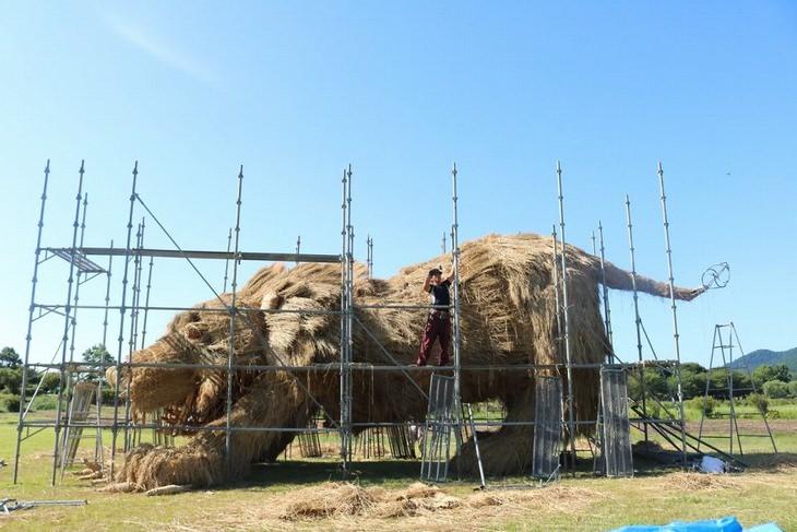 פסטיבל ווארה, יפן , לפסלי חיות העשויים מגבעולי קש אורז: פסל אריה סביב פיגומים