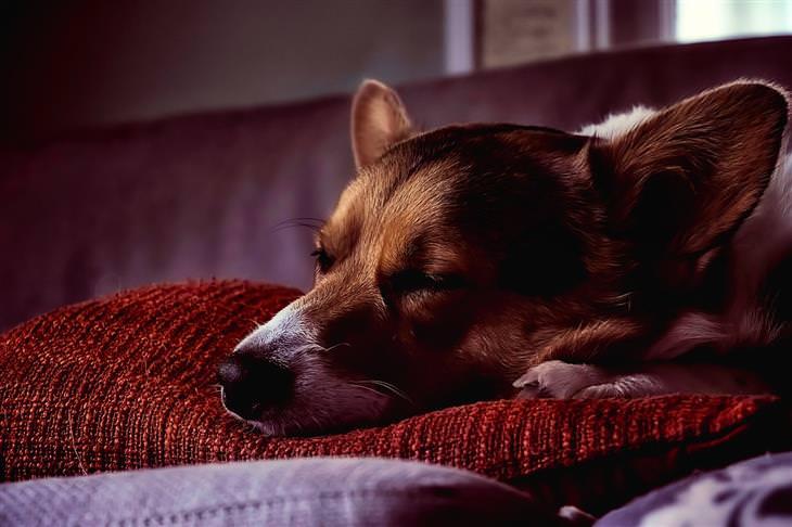 טעויות עם חיות המחמד: כלב ישן