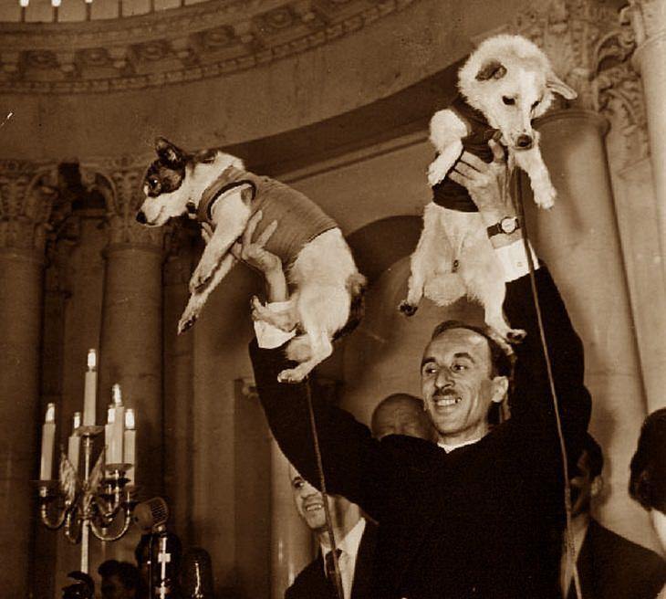 תמונות היסטוריות מעניינות: בכיר סובייטי מציג לראווה את הכלבות הראשונות ששהו בחלל