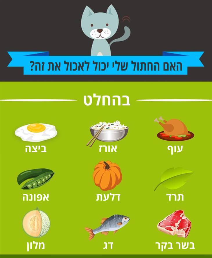 האם החתול שלי יכול לאכול את זה: בהחלט: עוף, אורז, ביצה, תרד, דלעת, אפונה, בשר בקר, דג, מלון