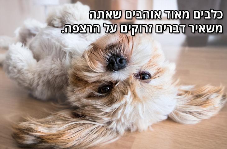 למה הכלב הוא החבר הטוב ביותר של הגבר: כלבים מאוד אוהבים שאתה משאיר דברים זרוקים על הרצפה.
