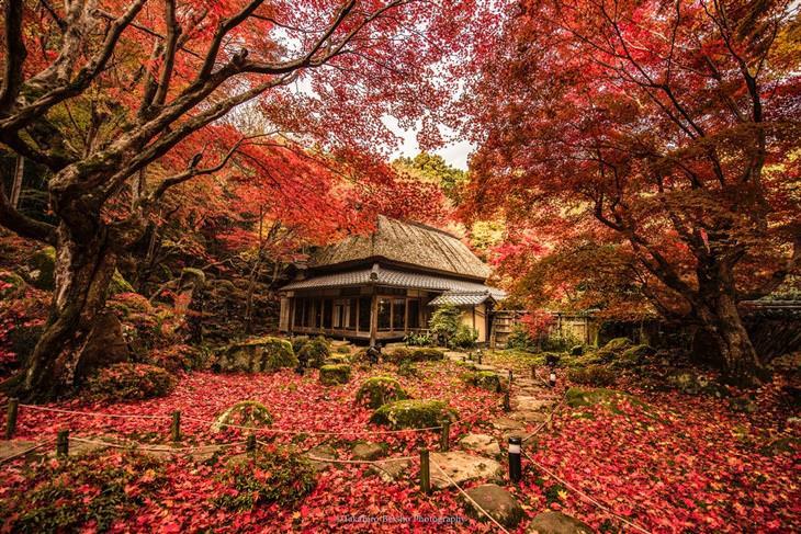 צילומים מדהימים של יפן