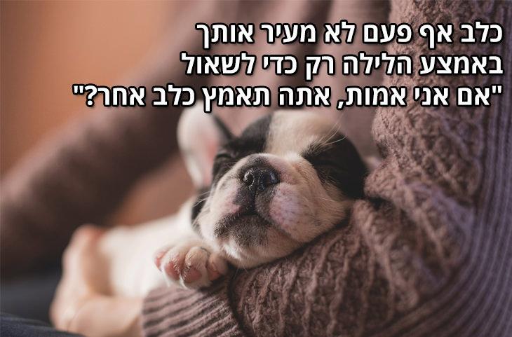 """למה הכלב הוא החבר הטוב ביותר של הגבר: כלב אף פעם לא מעיר אותך באמצע הלילה רק כדי לשאול """"אם אני אמות, אתה תאמץ כלב אחר?"""""""